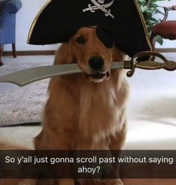 So y'all just gonna scroll past without saying ahoy memes