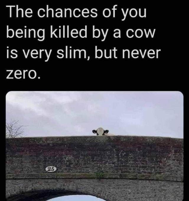 The chances of you being killed by a cow is very slim, but never Zero memes