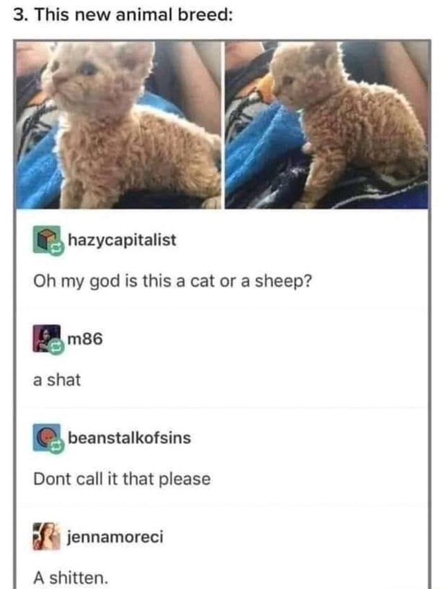 3. This new animal breed Oh my god is this cat or a sheep shat beanstalkofsins Dont call it that please jennamoreci A shitten meme