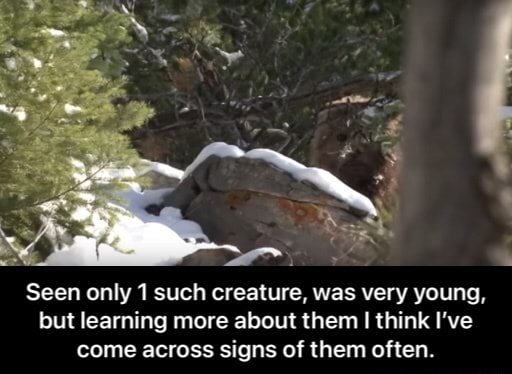 Seen only 1 such creature, was very young, but learning more about them think I've come across signs of them often. Seen only 1 such creature, was very young, but learning more about them I think I've come across signs of them often memes