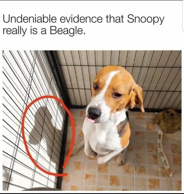 I don't believe it Undeniable evidence that Snoopy really is a Beagle meme