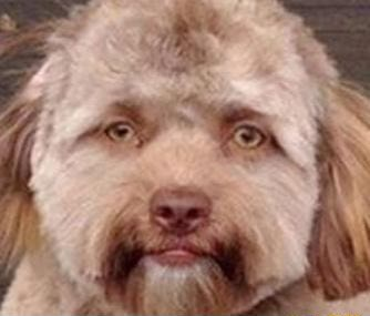 This dog deeply unsettles me meme
