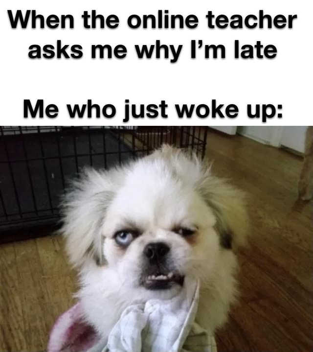 When the online teacher asks me why I'm late Me who just woke up memes