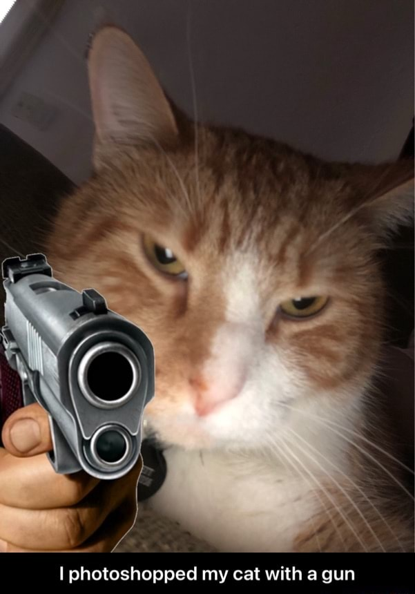 Photoshopped my cat with a gun  I photoshopped my cat with a gun memes
