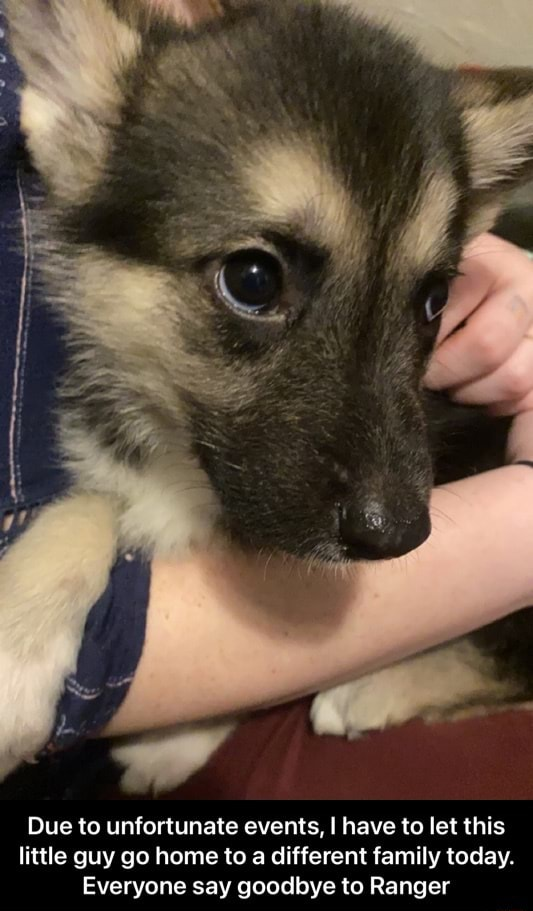 Due to unfortunate events, I have to let this little guy go home to a different family today. Everyone say goodbye to Ranger  Due to unfortunate events, I have to let this little guy go home to a different family today. Everyone say goodbye to Ranger memes