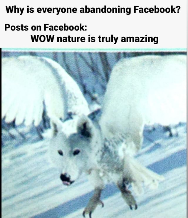 Why is everyone abandoning Facebook Posts on Facebook WOW nature is truly amazing meme