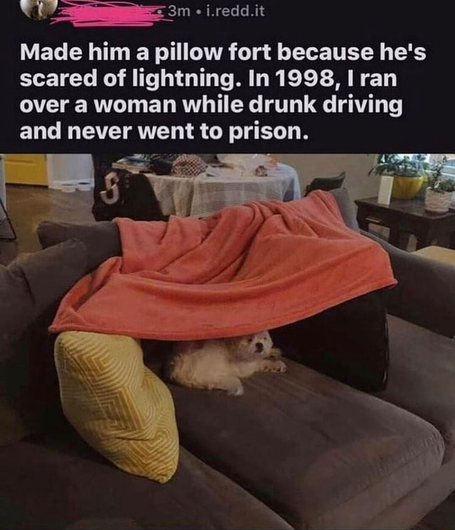 I.redd.it Made him a pillow fort because he's scared of lightning. In 1998, I ran over woman while drunk driving and never went to prison memes