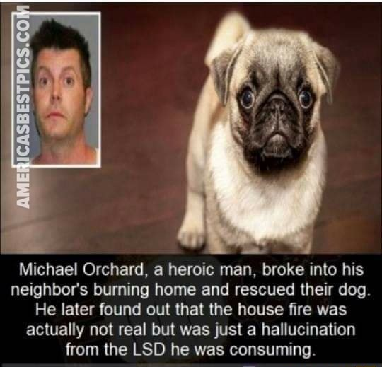 Michael Orchard, a heroic man, broke into his neighbor's burning home and rescued their dog. He later found out that the house fire was actually not real but was just a hallucination from the LSD he was consuming memes