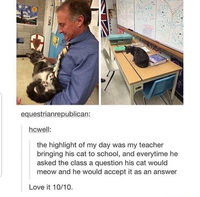 Equestrianrepublican howell the highlight of my day was my teacher bringing his cat to school, and everytime he asked the class a question his cat would meow and he would accept it as an answer Love it memes