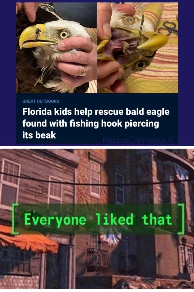 Murcia GREAT CUTDGORS Florida kids help rescue bald eagle found with fishing hook piercing its beak Everyone liked that SS memes
