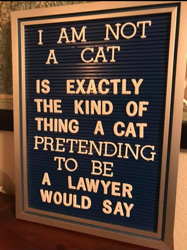 Ye AM NO IS EXACTLY THE KIND OF THING A CAT PRETENDING. TO BE LAWYER WOULD gay memes