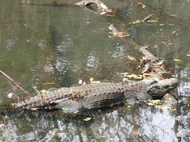 What post about Florida habitats wouldn't have gators These important top predators are in almost every water body in Florida and help build habitats during the dry season through deep holes, burrows, and wallows meme