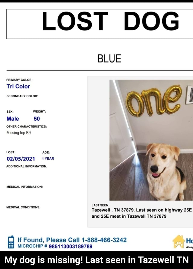LOST DOG BLUE PRIMARY COLOR Tri Color SECONDARY COLOR SEX WEIGHT Male 50 OTHER CHARACTERISTICS Missing top LOST AGE YEar ADDITIONAL INFORMATION MEDICAL INFORMATION LAST SEEN Tazewell, TN 37879. Last seen on highway and meet in Tazewell TN 37879 If Found, Please Call 1 888 466 3242 He MEDICAL CONDITIONS MICROCHIP  985113003189789 My dog is missing Last seen in Tazewell TN  My dog is missing Last seen in Tazewell TN meme