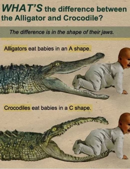 WHAT'S the difference between the Alligator and Crocodile The difference is in the shape of their jaws. Alligators eat babies in an A shape. cat babies ina shape memes