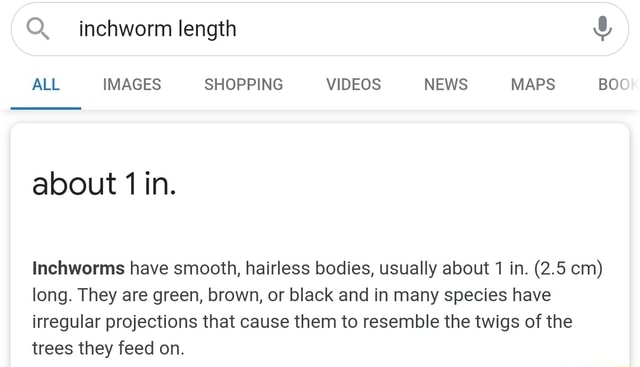 Inchworm length and ALL IMAGES SHOPPING NEWS MAPS BOO about in. Inchworms have smooth, hairless bodies, usually about 1 in. 2.5 cm long. They are green, brown, or black and in many species have irregular projections that cause them to resemble the twigs of the trees they feed on meme
