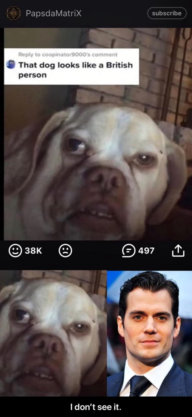PapsdaMatrix subscribe Reply to comment That dog looks like a British person do not see it.  I don't see it meme