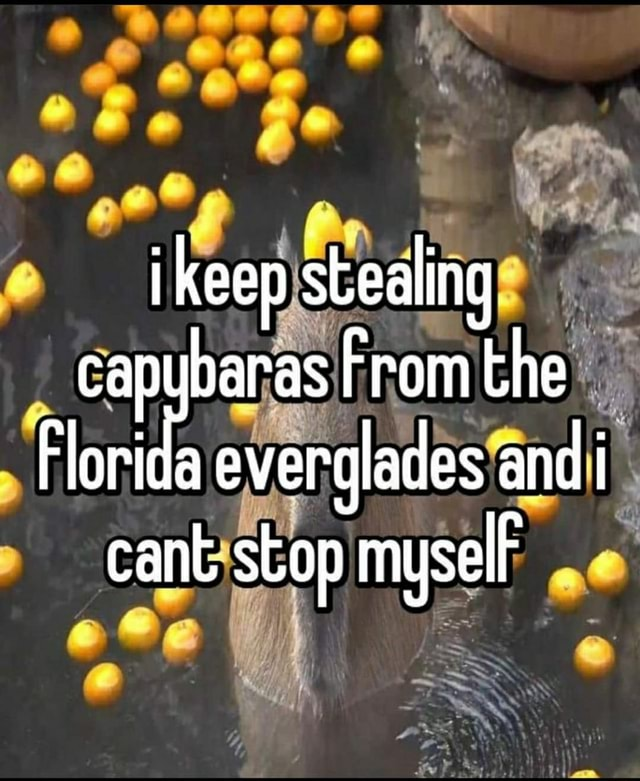 I keep stealing capybaras From the Florida everglades and i cant stop myselF memes