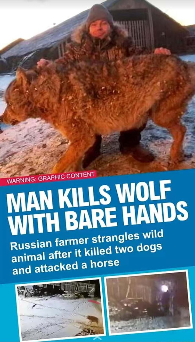 WARNING GRAPHIC CONTENT MAN KILLS WOLF WITH BARE HANDS Russian farmer strangles wild animal after it killed two dogs and attacked a horse memes