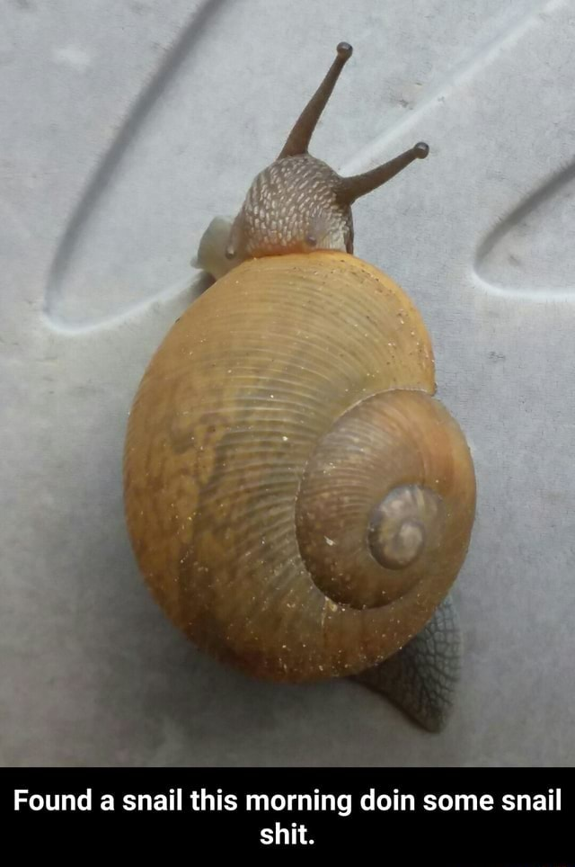 Found a snail this morning doin some snail shit memes