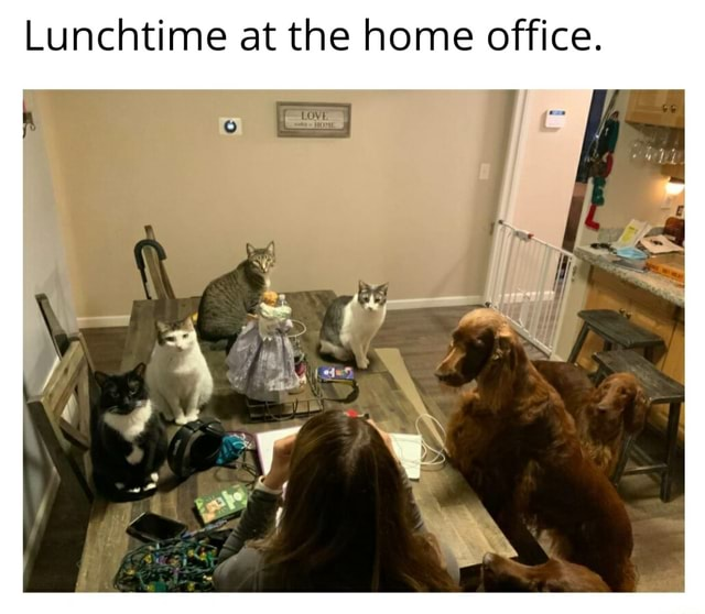 Lunchtime at the home office memes