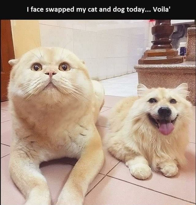 Face swapped my cat and dog today Voila memes