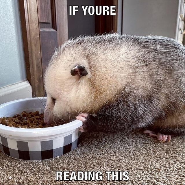 IF YOURE READING THIS meme