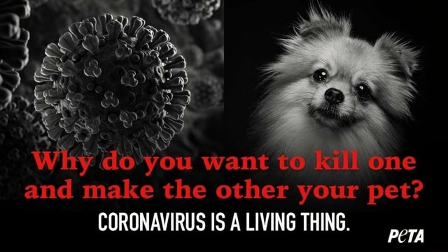 SS Why do you want and make the other your pet CORONAVIRUS IS LIVING THING memes