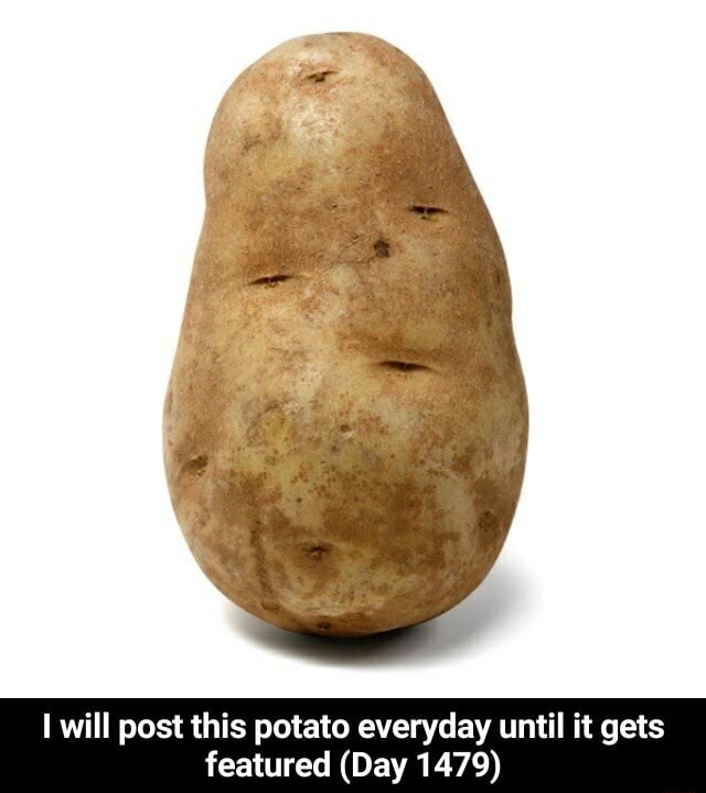 I will post this potato everyday until it gets featured Day 1479 I will post this potato everyday until it gets featured Day 1479 meme