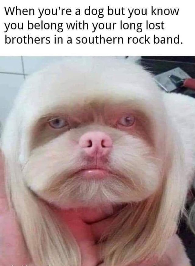 When you're a dog but you know you belong with your long lost brothers in a southern rock band meme