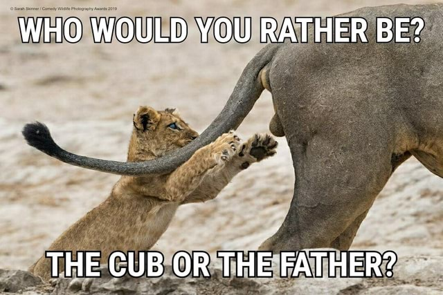 Sarah Skinner Photography Awards WHO WOULD YOU RATHER BE THE CUB OR THE FATHER memes