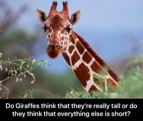 Do Giraffes think that they're re re really tall or do they think that everything else is short  Do Giraffes think that they're really tall or do they think that everything else is short memes