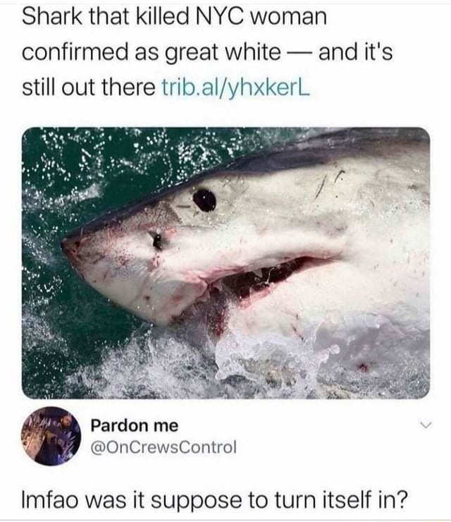 Shark that killed NYC woman confirmed as great white and it's still out there Pardon me OnCrewsContral Imfao was it suppose to turn itself in memes