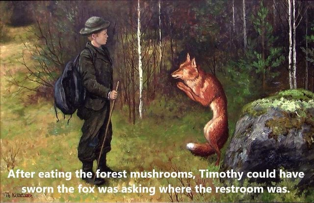 After eating the forest mushrooms, Timothy could have sworn the fox was asking where the restroom was memes