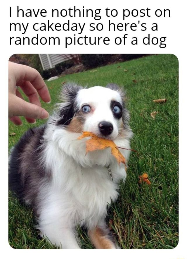 I have nothing to post on my cakeday so here's a random picture of a dog memes