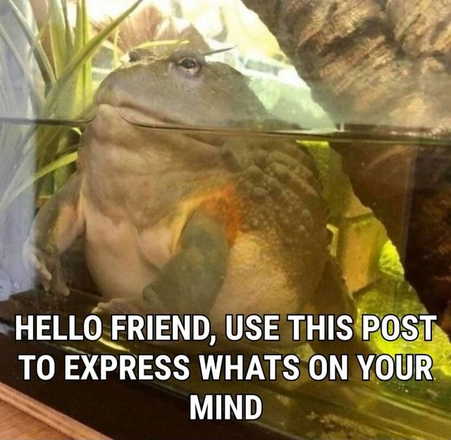 HELLO FRIEND, USE THIS POST TO EXPRESS WHATS ON YOUR MIND meme