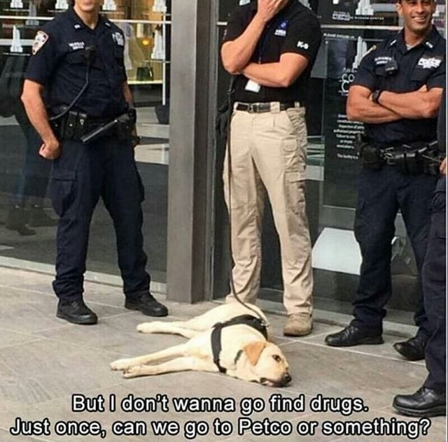 But dent wanna go find drugs. Just once. can we go to Petco or someihing I memes