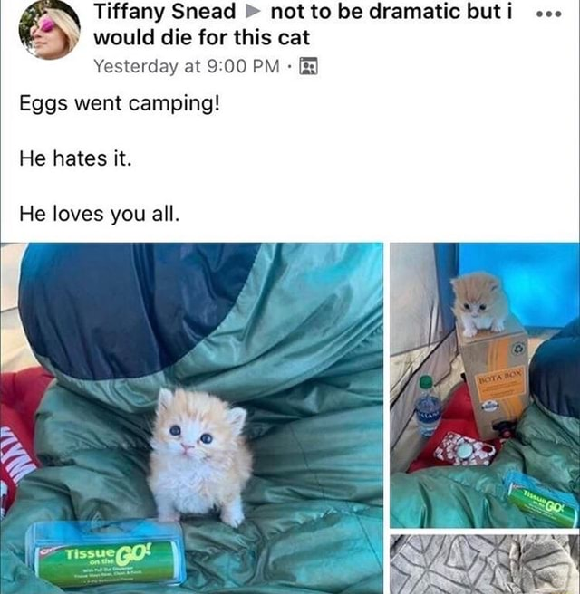 Tiffany Snead not to be dramatic but i would die for this cat Yesterday at PM Eggs went camping He hates it. He loves you all memes