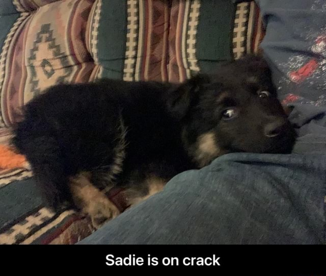 Sadie is on crack Sadie is on crack memes
