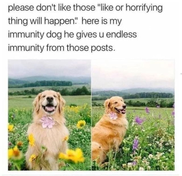 Please do not like those like or horrifying thing will happen* here is my immunity dog he gives u endless immunity from those posts meme