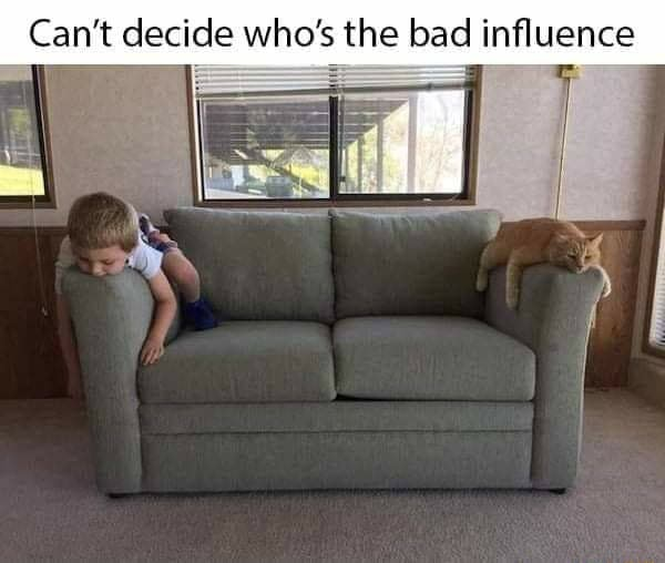 Can't dec Can't ide who's the bad influence memes