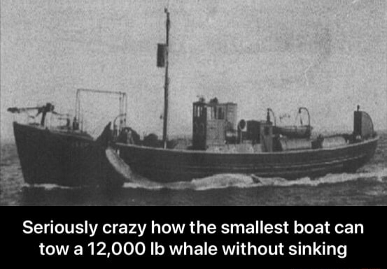 Seriously crazy how the smallest boat can tow a 12,000 lb whale without sinking Seriously crazy how the smallest boat can tow a 12,000 lb whale without sinking memes