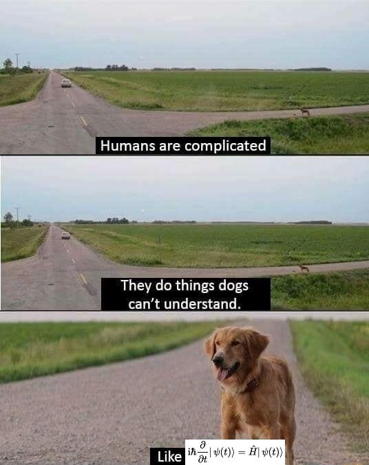 Humans are complicated They do things dogs can not understand memes