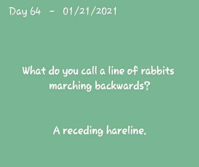Day 64  What do you call line of rabbits marching backwards A receding hareline, memes