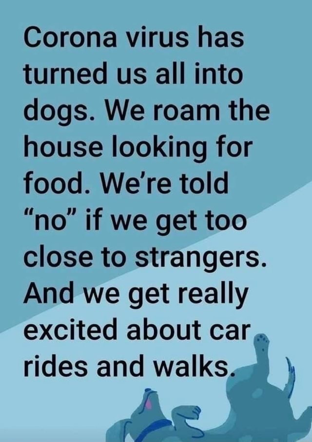 Corona virus has turned us all into dogs. We roam the house looking for food. We're told no if we get too close to strangers. And we get really excited about car rides and walks meme