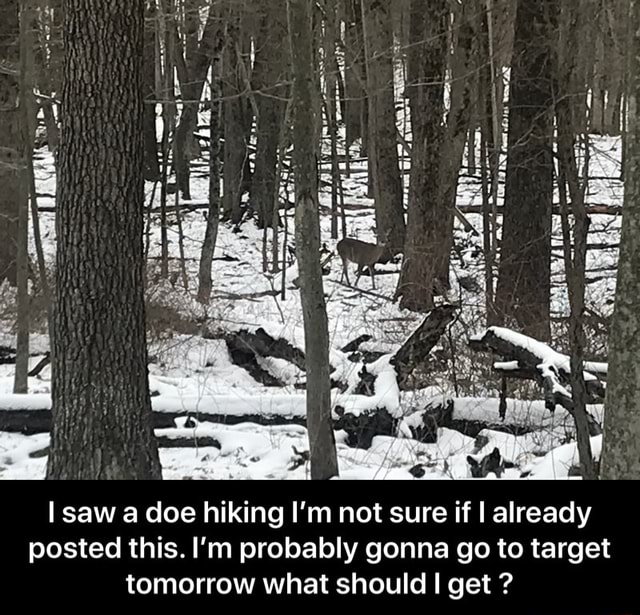 Al ge fl I saw a doe hiking I'm not sure if I already posted this. I'm probably gonna go to target tomorrow what should I get   I saw a doe hiking I'm not sure if I already posted this. I'm probably gonna go to target tomorrow what should I get memes