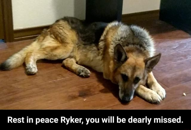 Rest in peace Ryker, you will be dearly missed. Rest in peace Ryker, you will be dearly missed meme