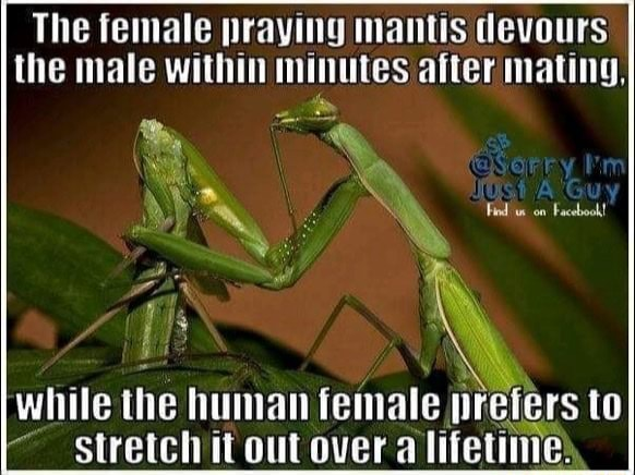 The female praying mantis devours the male within minutes after mating, while the human female nreter to stretch it out over a lifetime orr on Facebook to memes