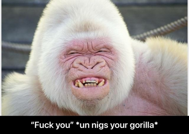 Fuck you *un nigs your gorilla* Fuck you *un nigs your gorilla* memes