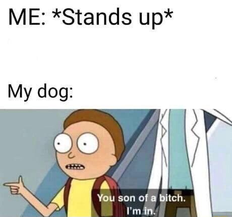 ME *Stands up* My dog You son of bitch. min memes