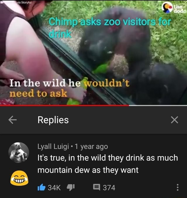200 visitors In the wildhe need to ask Replies x Lyall Luigi 1 year ago It's true, in the wild they drink as much mountain dew as they want 1 374 memes